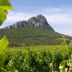 12-12-2009 : Verslag van een wijnreis naar Pic-Saint-Loup