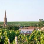 19-01-2008 : Sauternes