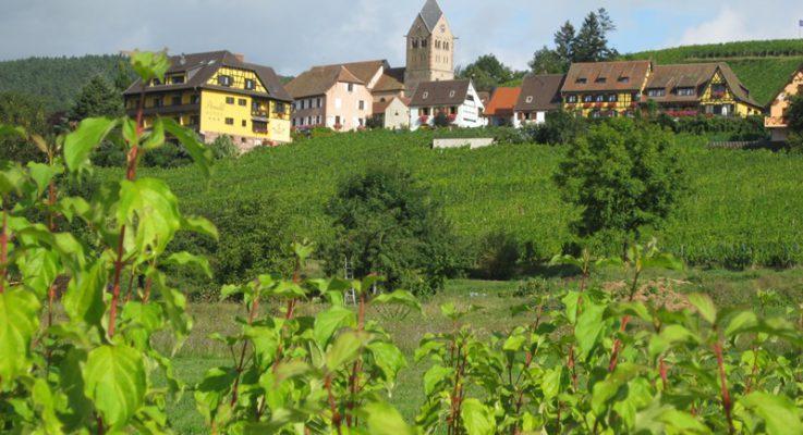 20-01-2018 : J.L. Schwartz – Wijnbouwer uit de Elzas